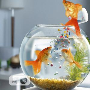 Fish Bowl With Full Kit | Fish for sale in Lagos State, Surulere