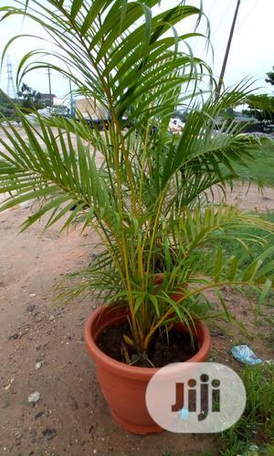 Flowers In Pit | Farm Machinery & Equipment for sale in Ogun State, Ado-Odo/Ota