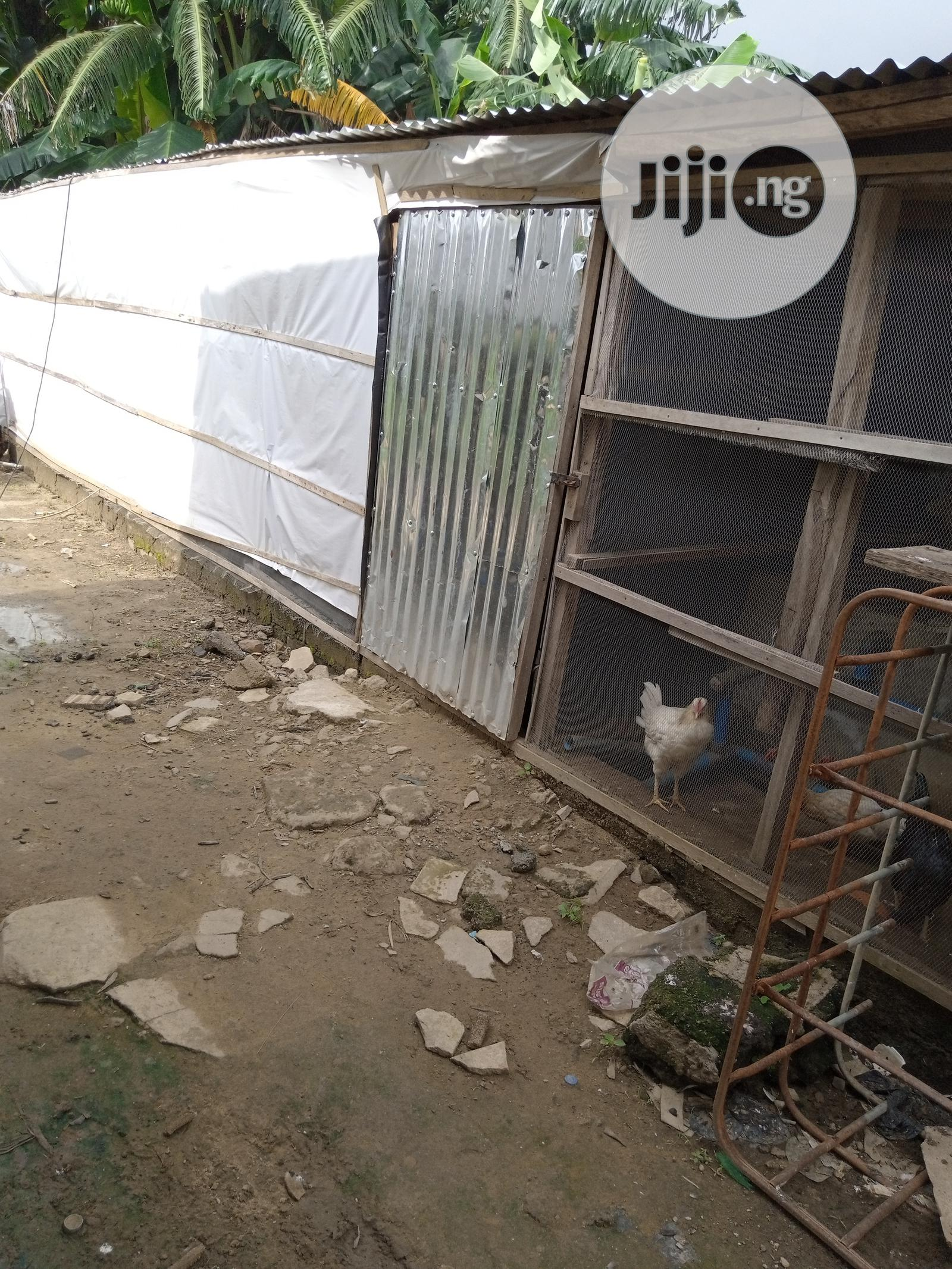 Catfish Hatchery | Commercial Property For Rent for sale in Dutse-Alhaji, Abuja (FCT) State, Nigeria