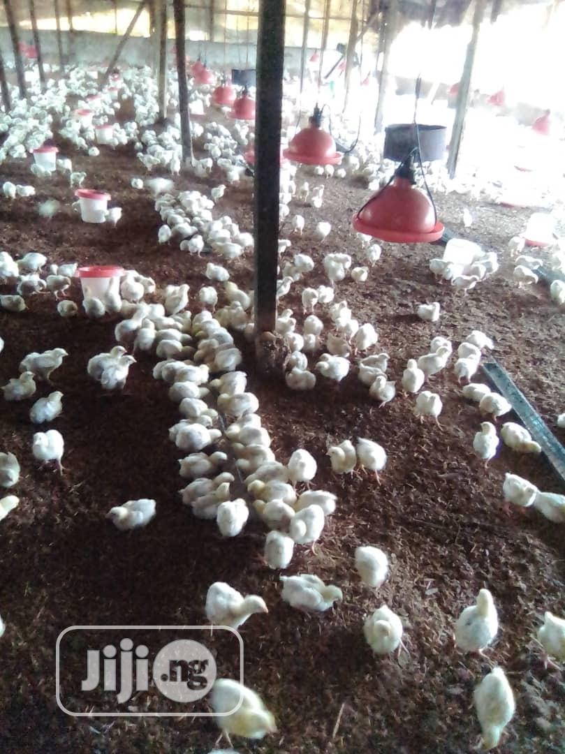 Broiler Chicken | Livestock & Poultry for sale in Apapa, Lagos State, Nigeria
