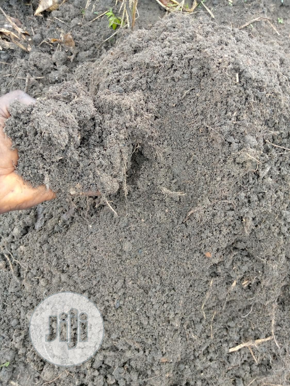 Snails Breathing Soil   Other Animals for sale in Ado-Odo/Ota, Ogun State, Nigeria