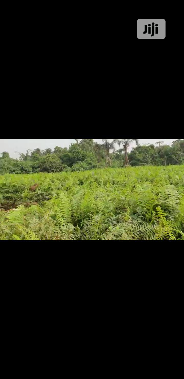 Land for Sale in Obosi Anambra State | Land & Plots For Sale for sale in Idemili, Anambra State, Nigeria