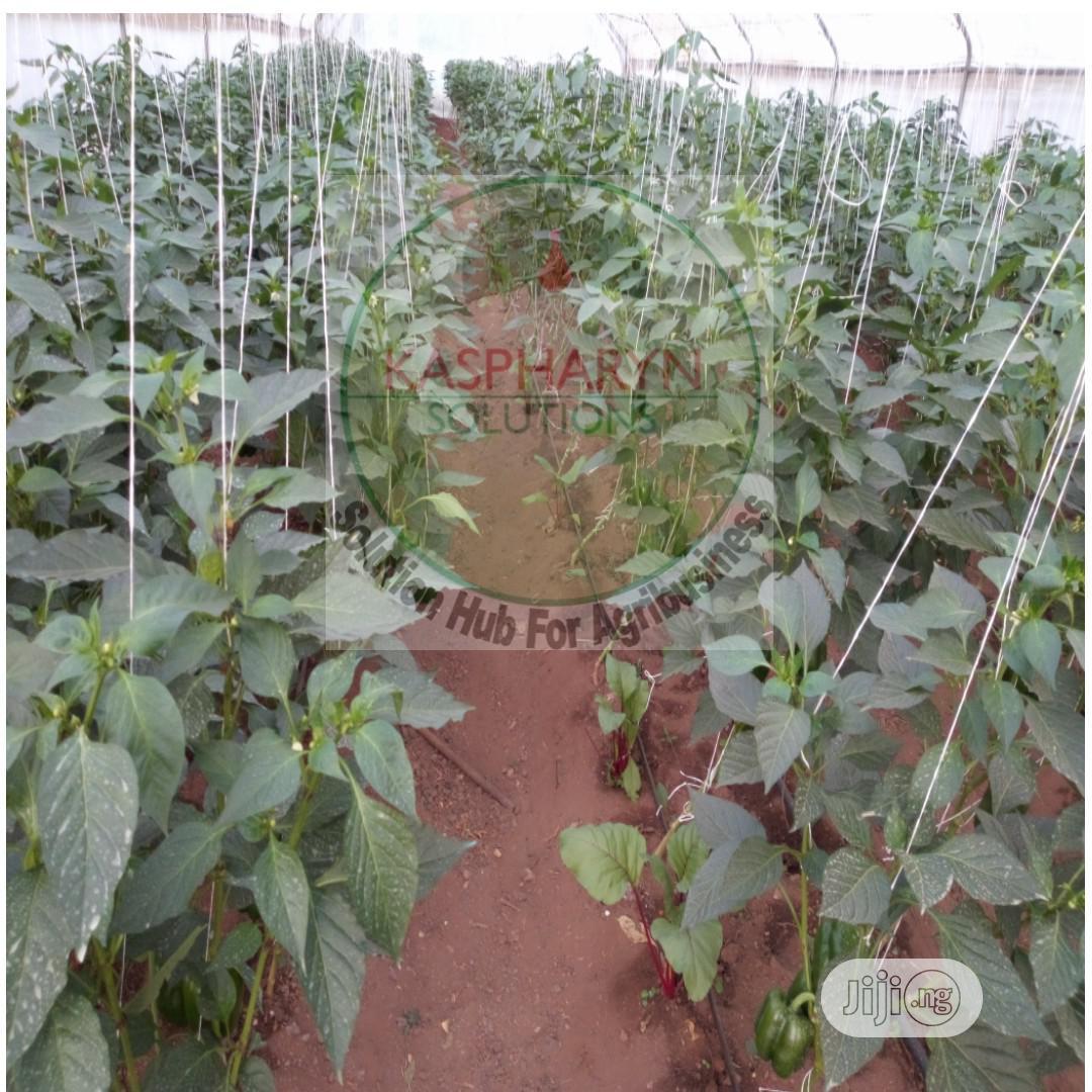 Galvanized Greenhouse And Drip Irrigation Installation | Farm Machinery & Equipment for sale in Odeda, Ogun State, Nigeria
