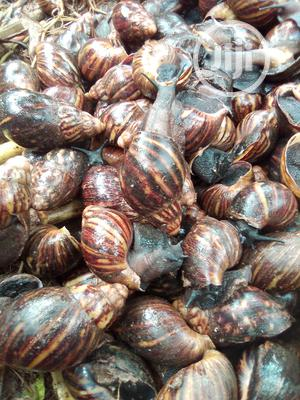 Point Of Lay   Other Animals for sale in Ogun State, Ado-Odo/Ota