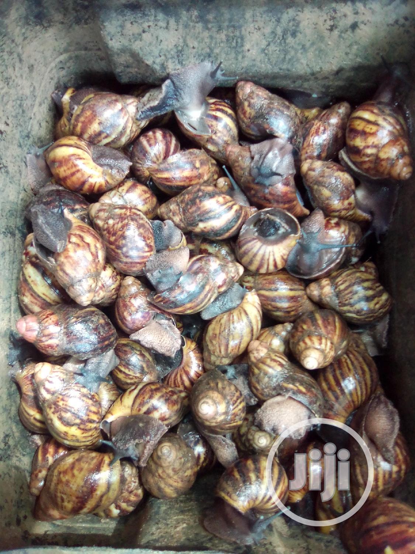 Archive: Snails For Sale