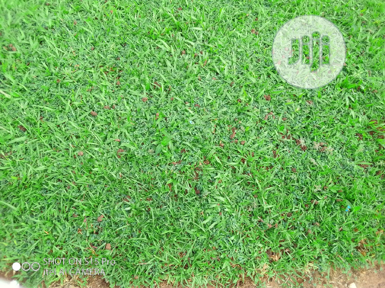 Archive: Termites Elimination On Gardens