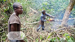 Tree Maintenance And Landscaping | Landscaping & Gardening Services for sale in Lagos State, Ikotun/Igando