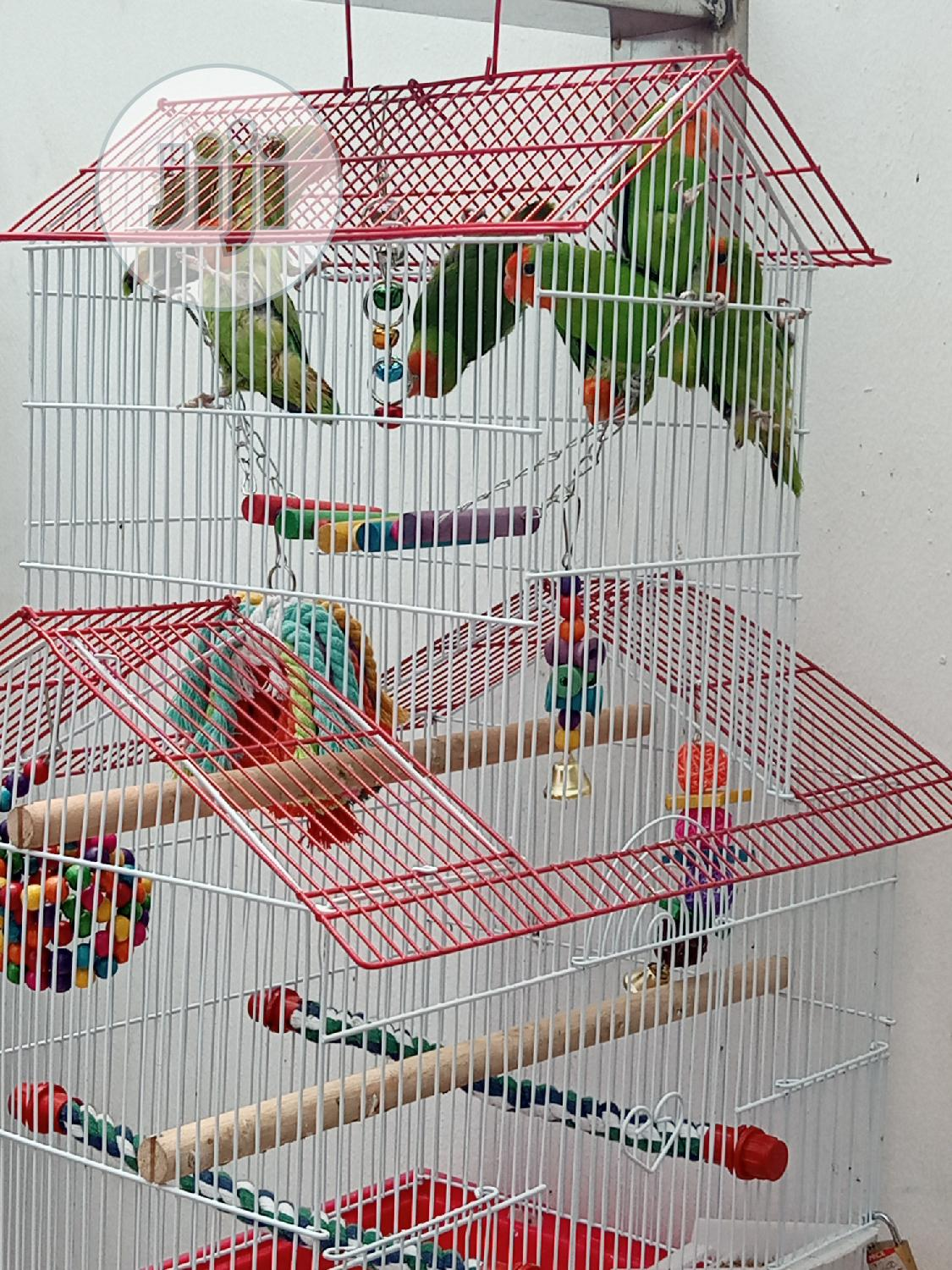 Well Healthy Lovely Colorful Birds Is Available For Sales | Birds for sale in Surulere, Lagos State, Nigeria