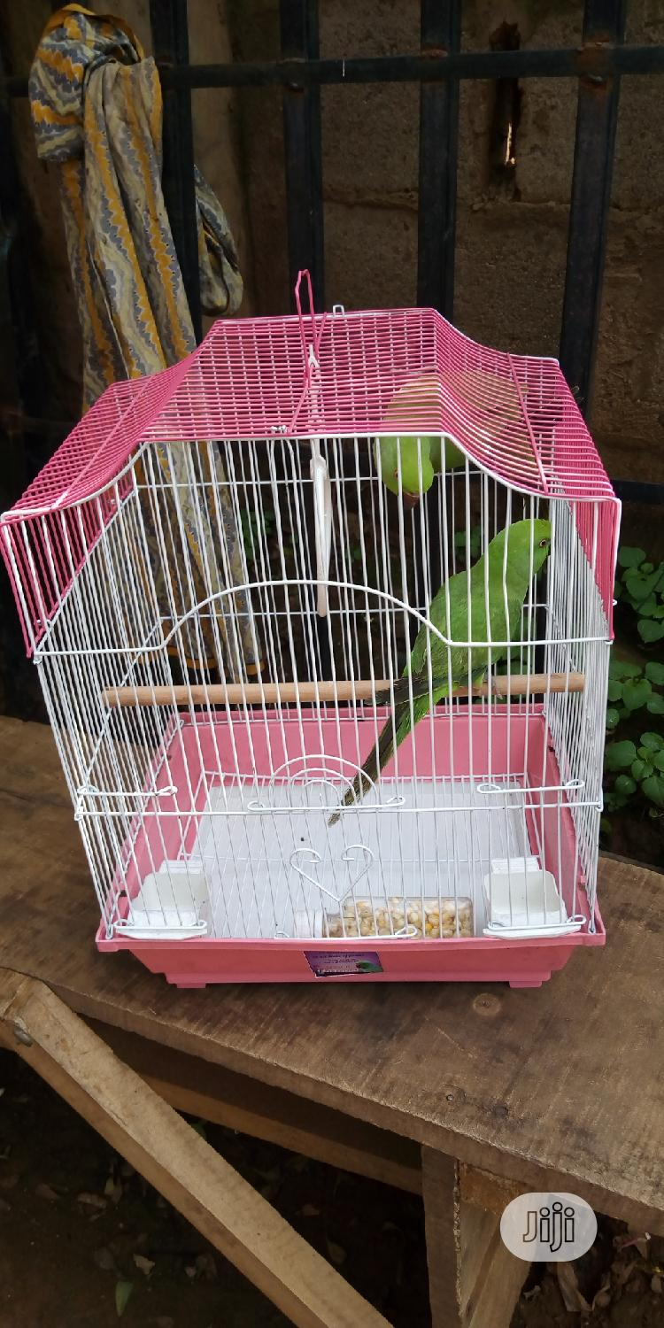 Ring Neck Parrot & Foreign Cage