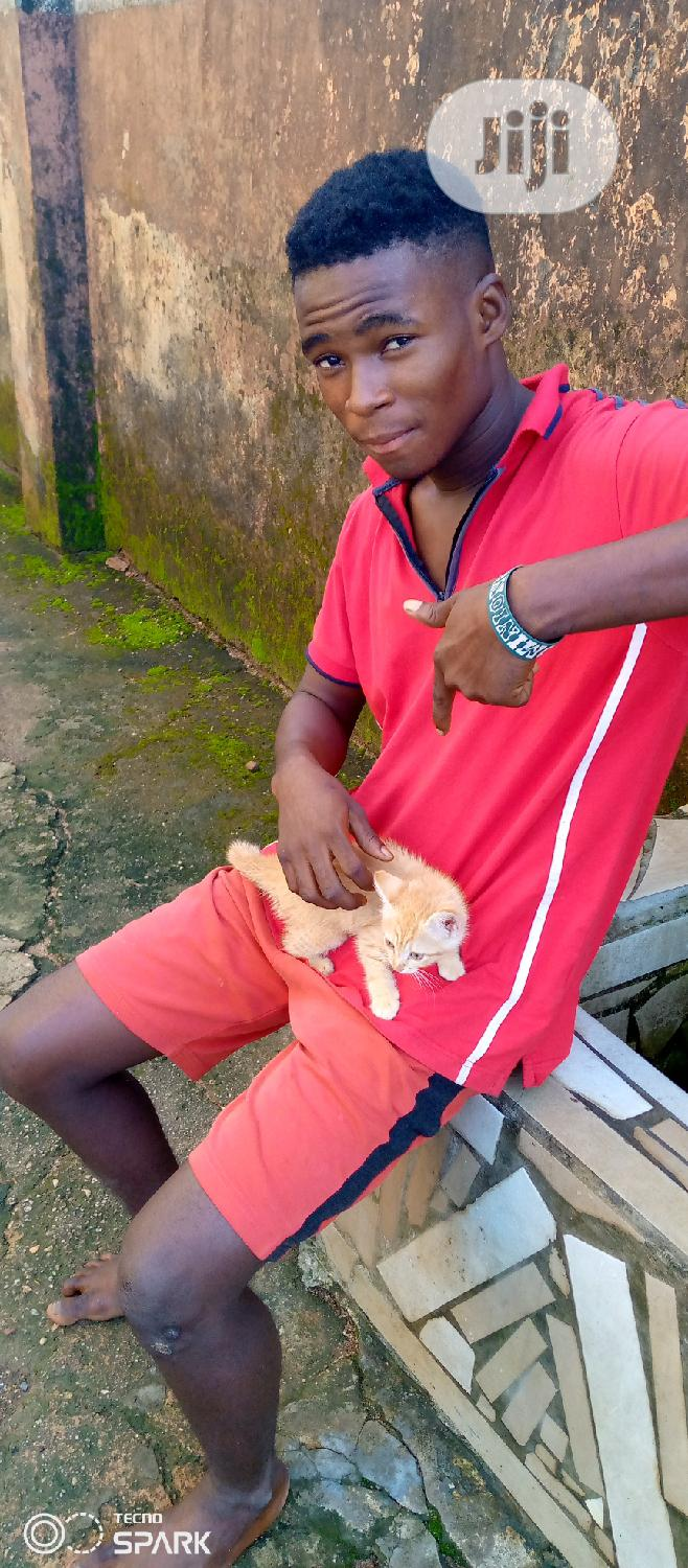 Baby Male Mixed Breed Mongrel (No Breed) | Cats & Kittens for sale in Umuahia, Abia State, Nigeria
