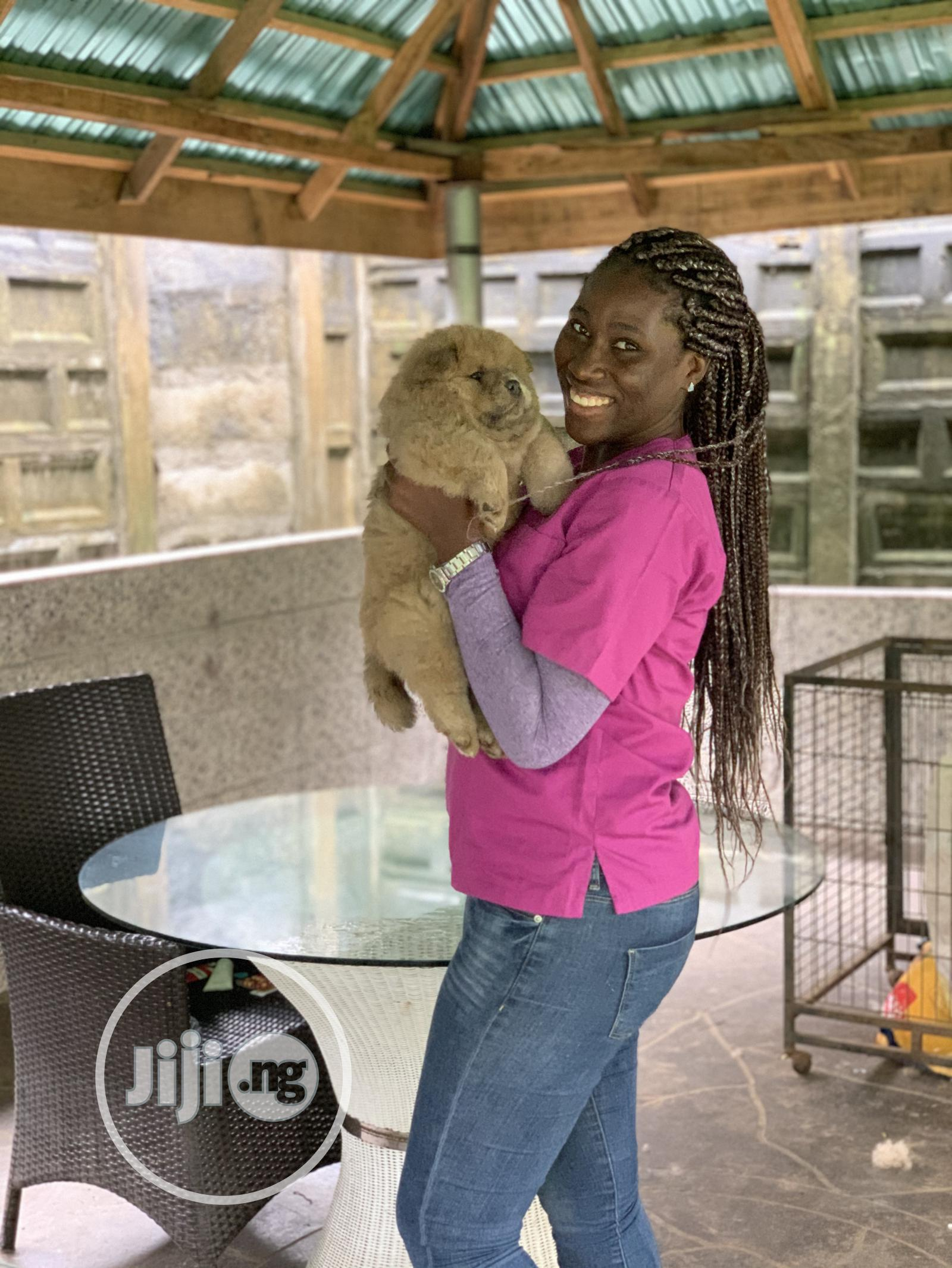 Veterinary Services | Pet Services for sale in Ajah, Lagos State, Nigeria
