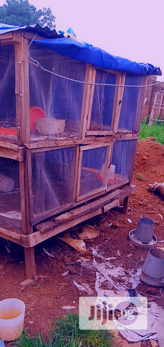 Archive: Mature Turkey, Guesses And Big Cage For Sale