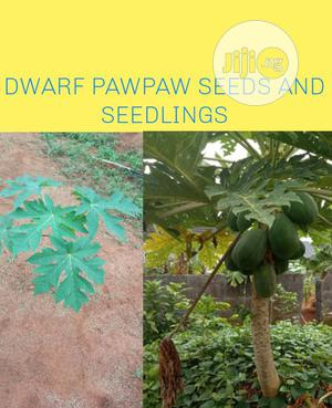 Dwarf Pawpaw Seeds And Seedlings | Feeds, Supplements & Seeds for sale in Lagos State, Ojodu