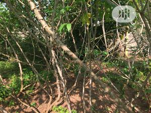 Land for Sale . | Land & Plots For Sale for sale in Edo State, Benin City
