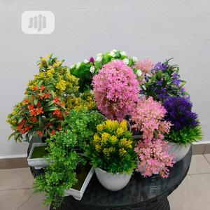 Best Indoor Plants For Homes And Offices Bonsai Tree | Garden for sale in Lagos State, Ikeja
