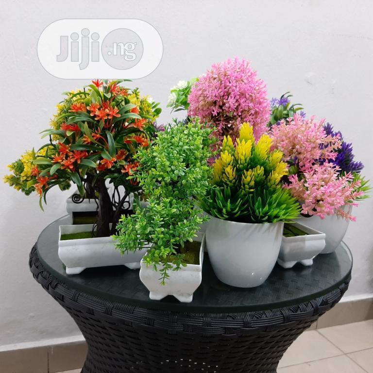 Bonsai Plants Bonsai Indoor Table Plants