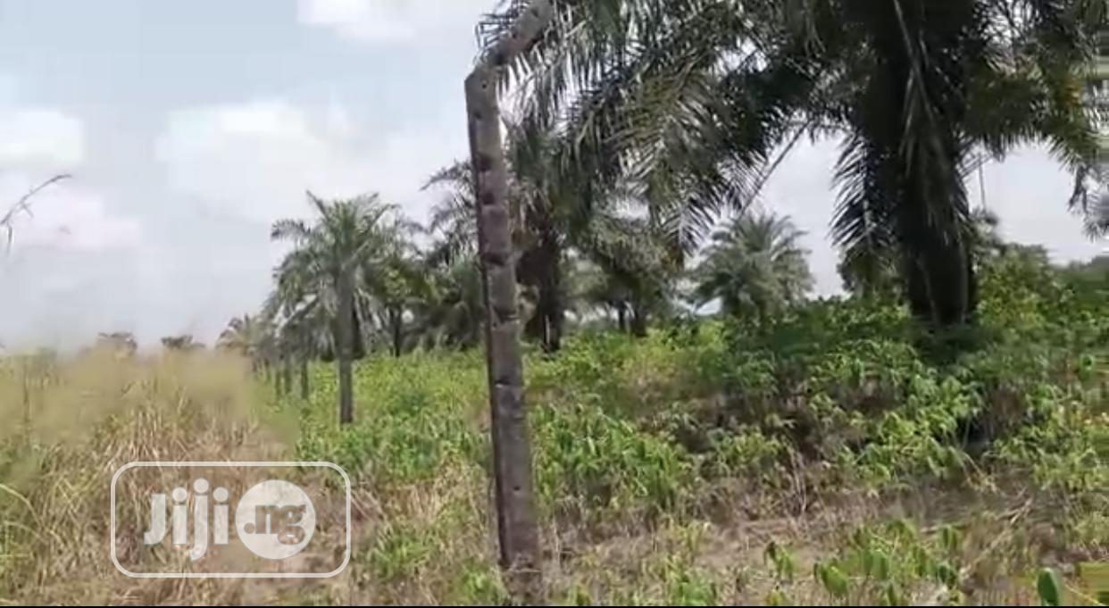 Archive: 1400 Plots of Palm Plantation at Mgbakwu