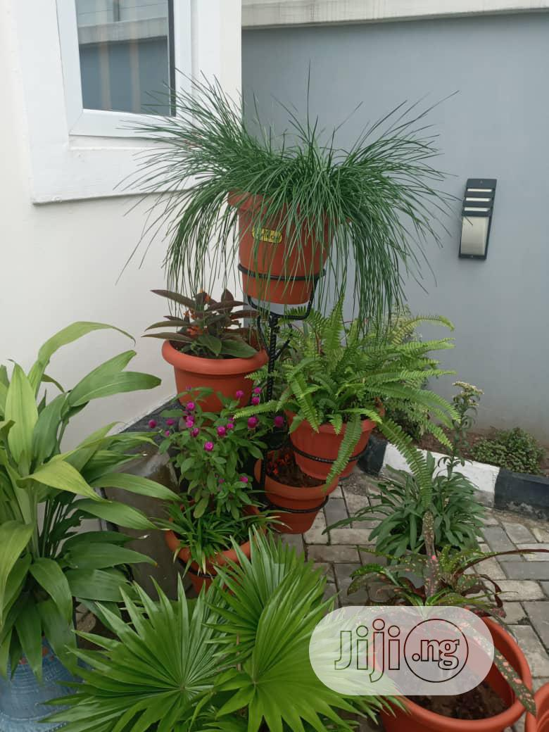 Archive: Beautiful Flowers And Landscaping For Your Homes And Gardens