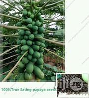 Dwarf Pawpaw Seeds   Feeds, Supplements & Seeds for sale in Kaduna State, Kaduna