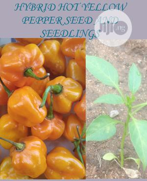 Hybrid Orange Habanero Pepper Seed and Seedlings | Feeds, Supplements & Seeds for sale in Lagos State, Ojodu
