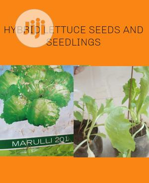 Hybrid Lettuce Seeds And Seedlings | Feeds, Supplements & Seeds for sale in Lagos State, Ojodu