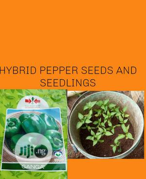 Hybrid Pepper Seeds And Seedlings   Feeds, Supplements & Seeds for sale in Lagos State, Ojodu