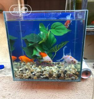 Mini Top Table Aquarium   Fish for sale in Lagos State, Surulere