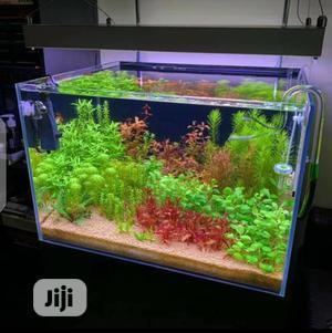 Quality Table Top Aquarium   Fish for sale in Lagos State, Surulere