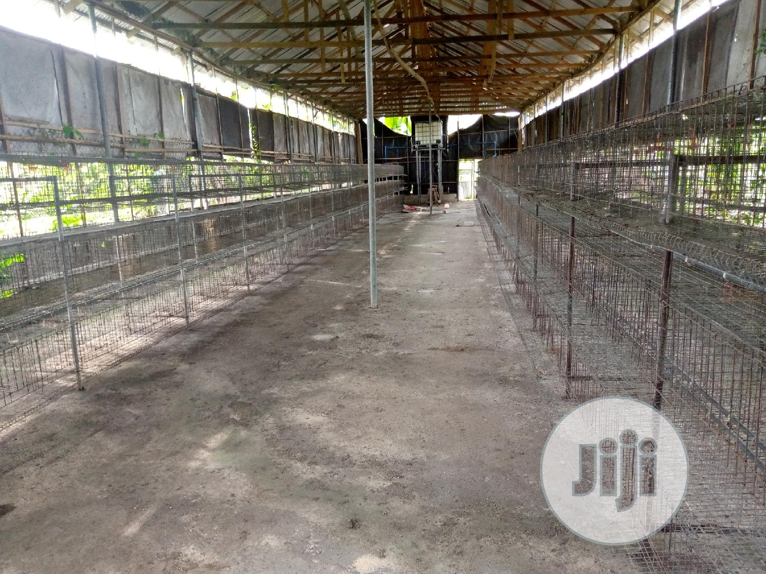 Poultry Farm   Farm Machinery & Equipment for sale in Port-Harcourt, Rivers State, Nigeria