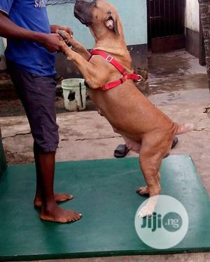Professional Dog Trainer   Pet Services for sale in Oyo State, Oluyole