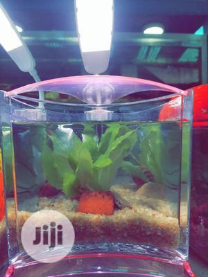 Mini Aquarium For Sale   Fish for sale in Lagos State, Ikeja