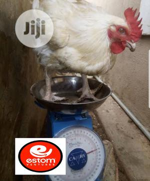 Fresh Broilers | Livestock & Poultry for sale in Lagos State, Gbagada
