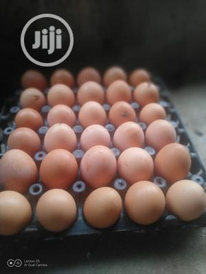 Fresh Chicken Eggs   Meals & Drinks for sale in Oyo State, Ibadan