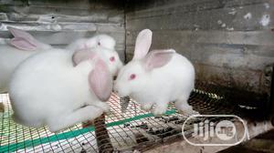 Rabbits For Sale   Livestock & Poultry for sale in Ogun State, Ado-Odo/Ota