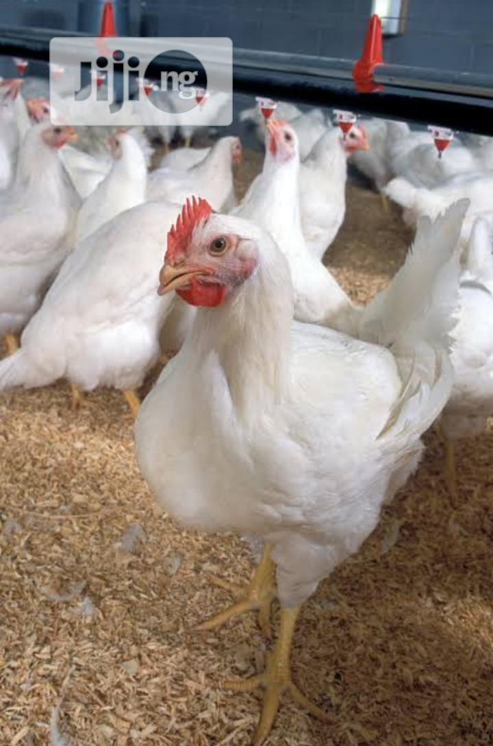 Archive: Broilers For Sale