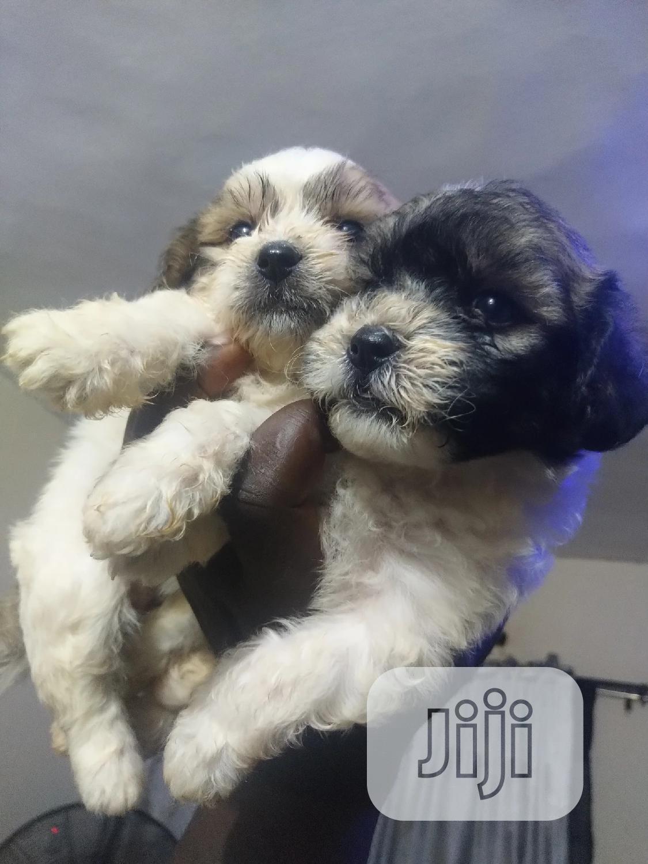 Archive: 0-1 month Male Purebred Dog