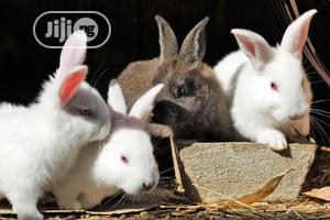 Rabbits And Rabbit Feeds   Livestock & Poultry for sale in Abuja (FCT) State, Gwagwalada