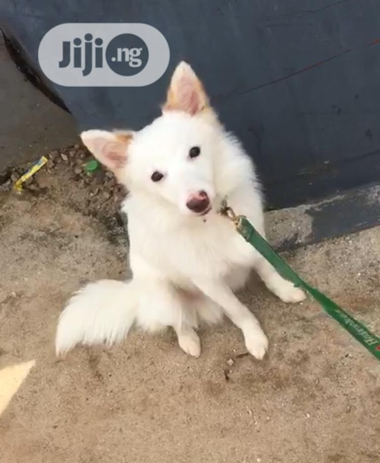 Archive: 3-6 Month Male Purebred Dog