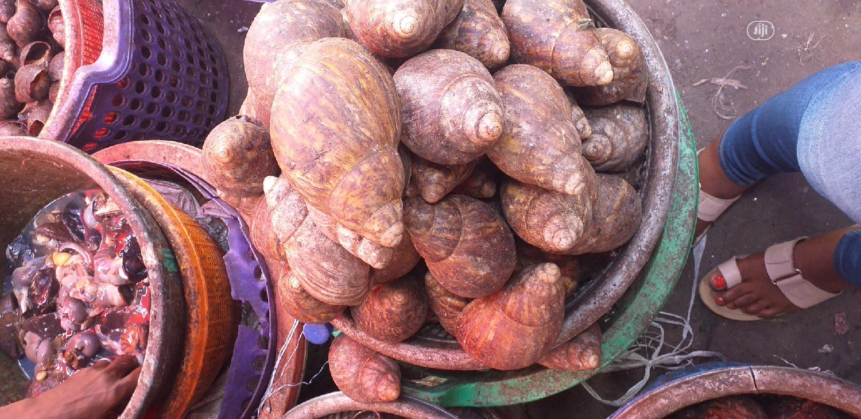Archive: Jumbo Size Bush Snail