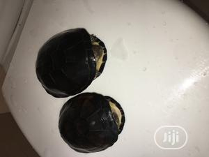 Water Turtles | Reptiles for sale in Lagos State, Ojodu