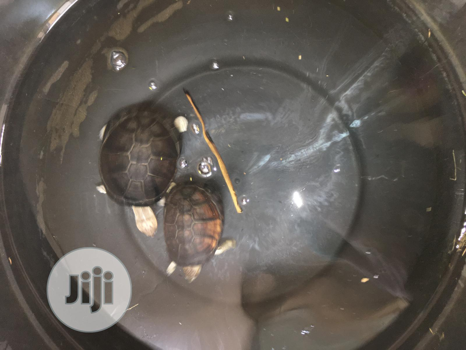 Archive: Water Turtles