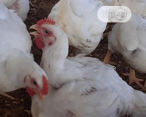 Broiler For Sale | Livestock & Poultry for sale in Osun State, Osogbo