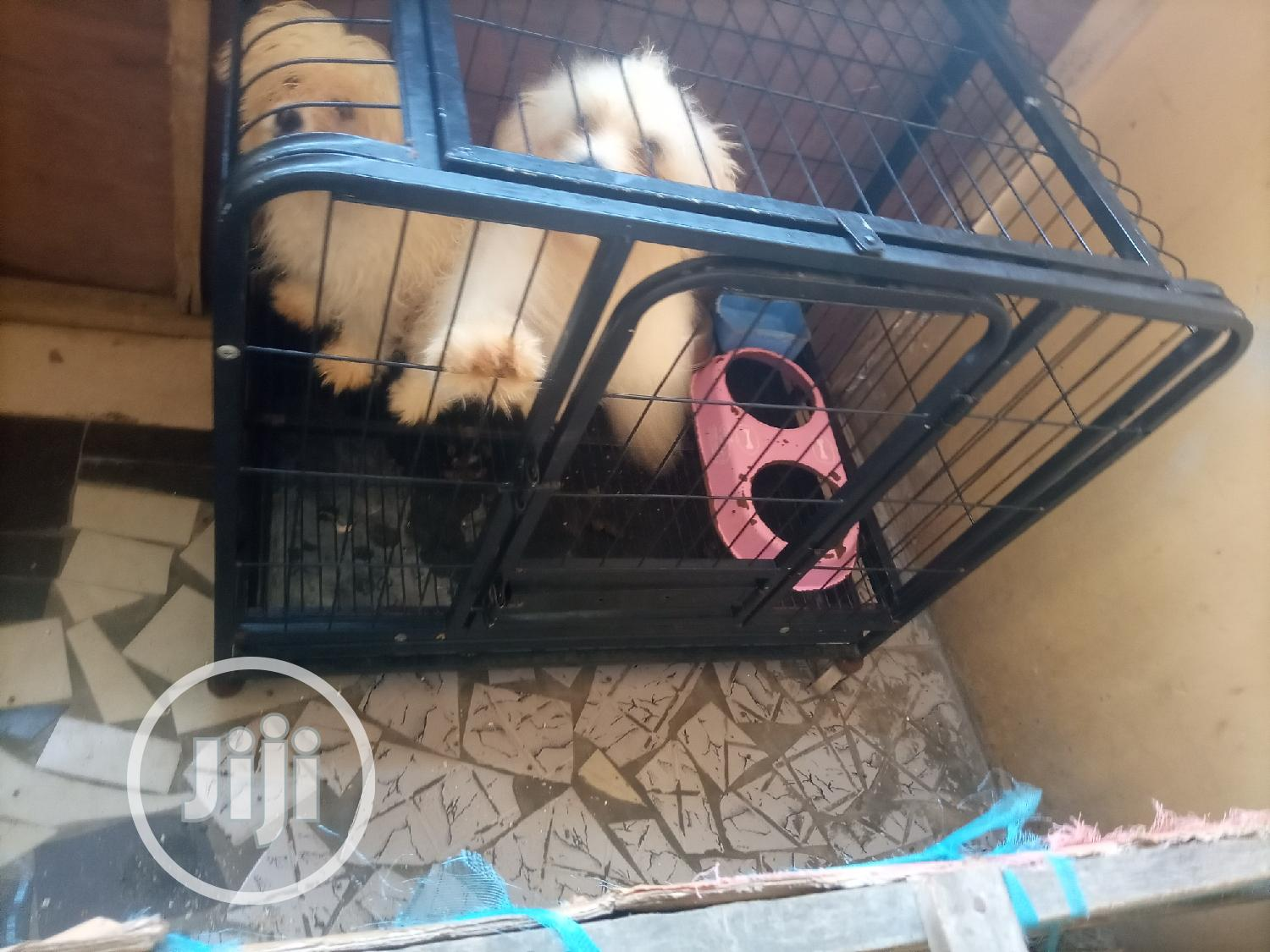 Size 6 Dog Cage Is For Sales