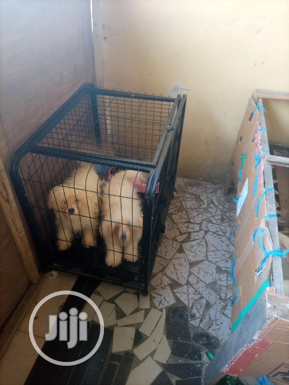 Size 6 Dog Cage Is For Sales | Pet's Accessories for sale in Surulere, Lagos State, Nigeria