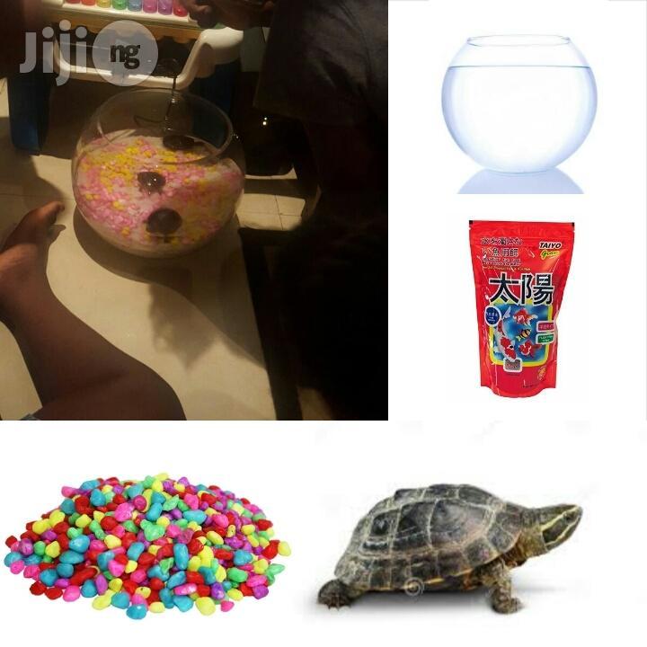 Archive: Tortoise Kit Plus One Tortoise
