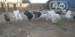 Local Mature Turkey For Sale | Livestock & Poultry for sale in Nasarawa State, Karu-Nasarawa
