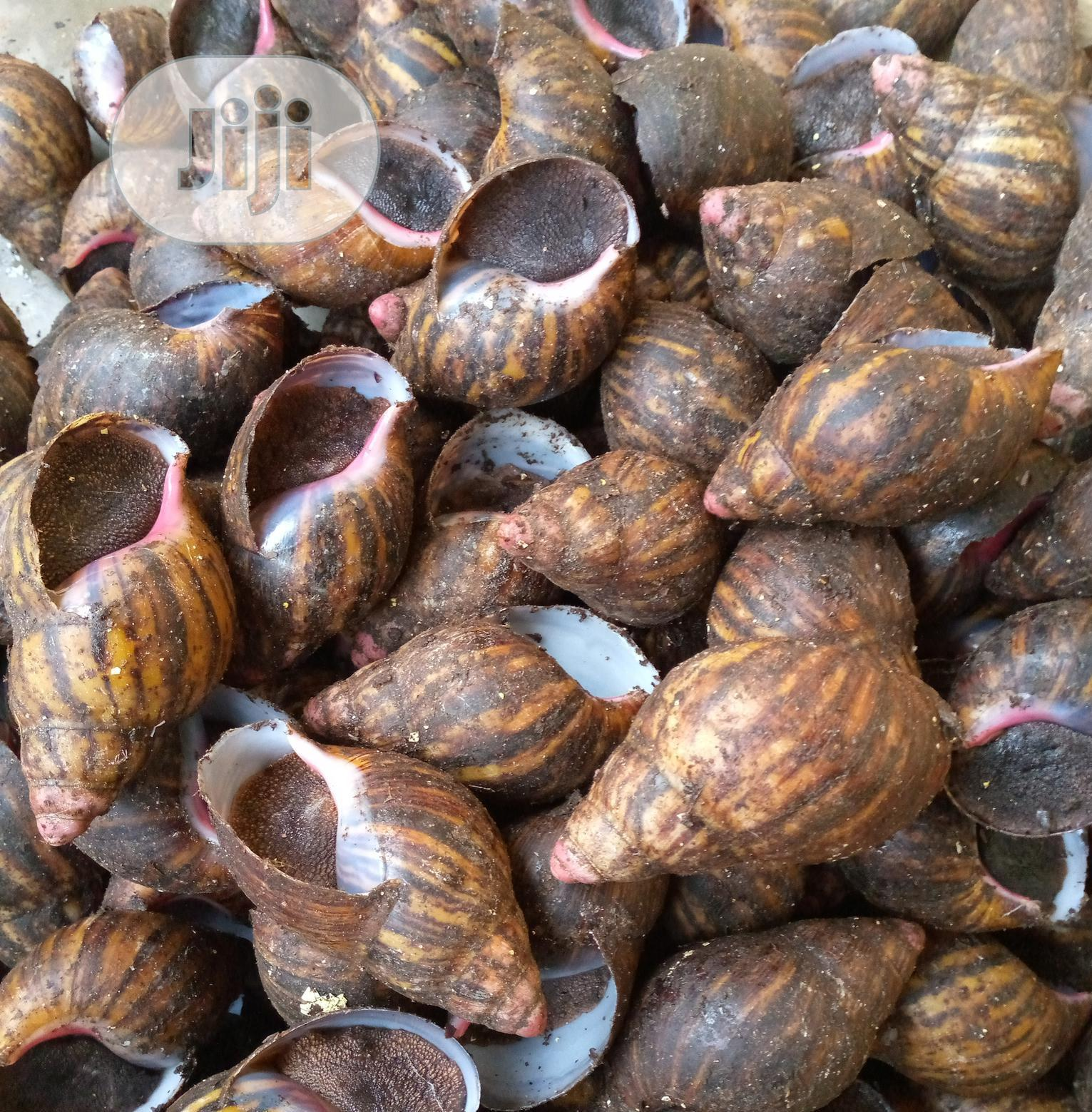 Large Snail Selling   Other Animals for sale in Udu, Delta State, Nigeria