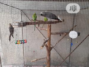 African Grey | Birds for sale in Lagos State, Badagry