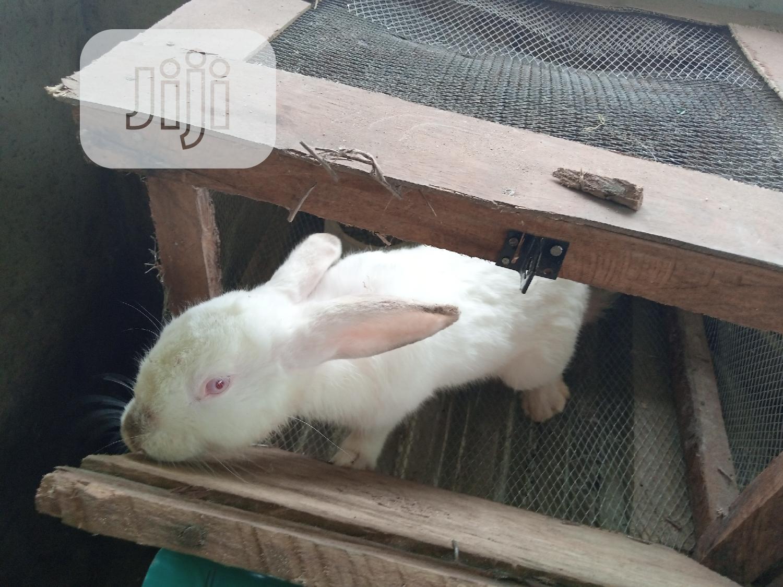 Archive: Rabbits ! Rabbits !! Rabbits !!!