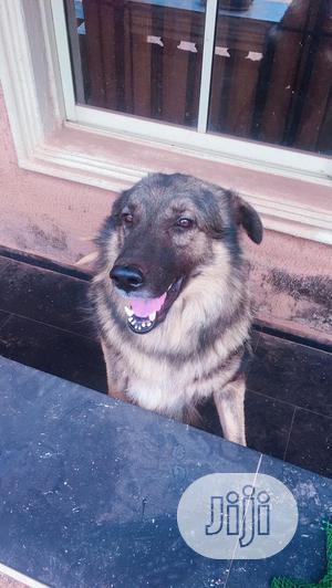 Stud/Crossing/Mating | Pet Services for sale in Enugu State, Enugu